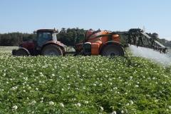 Ošetření pole s bramborami